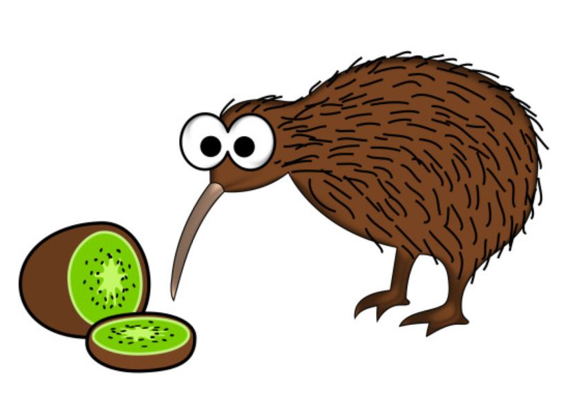 Kiwi eating kiwi fruit